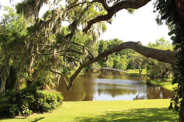 Big Tree overlooking lake and bridge at Middleton Place